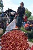 画像3: ケニア ニエリ テグ水洗工場 (3)