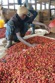 画像4: ケニア ニエリ テグ水洗工場 (4)