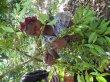画像5: エチオピア<フルーティーなナチュラル製法> (5)